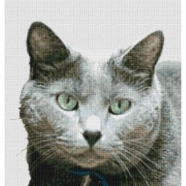 British Shorthair Cat  (Blue)  - Cross Stitch Chart