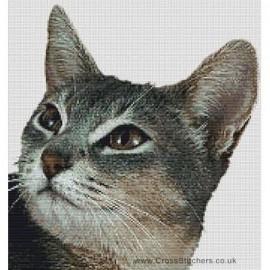 Abyssinian Cat (Blue)  - Cross Stitch Chart