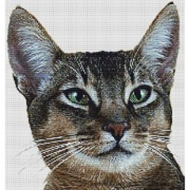 Abyssinian Cat (Usual)  - Cross Stitch Chart