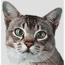 Asian Cat (Ticked Tabby) - Cross Stitch Chart