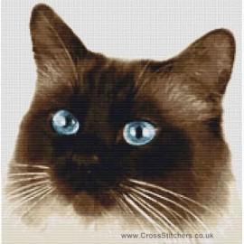 Birman Cat  (Seal Point)  - Cross Stitch Chart
