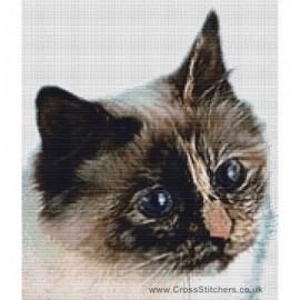 Birman Cat  (Seal Tortie Point)  - Cross Stitch Chart