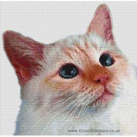 Birman Cat  (Red Point)  - Cross Stitch Chart