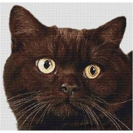 British Shorthair Cat  (Chocolate)  - Cross Stitch Chart