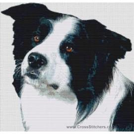 Border Collie (Black and White)  - Dog Cross Stitch Chart