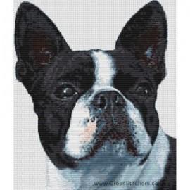 Boston Terrier - Dog Cross Stitch Chart