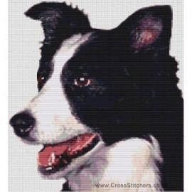 Border Collie  - Dog Cross Stitch Chart