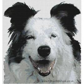 Border Collie (Blue Merle)  - Dog Cross Stitch Chart